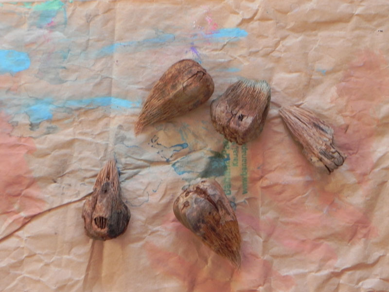 Painting with the Seed Pods of Kauai